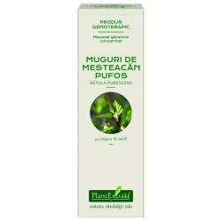 Extract concentrat din muguri de Mesteacan pufos-Betula pubescens MG PlantExtrakt