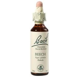 BEECH - FAG ( Fagus sylvatica)